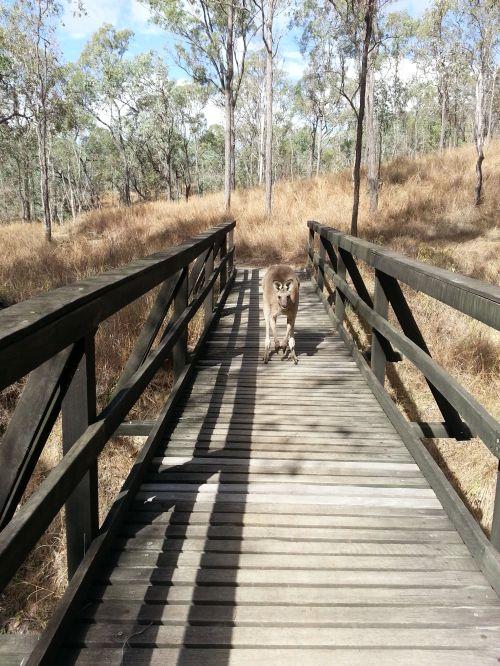 flatwater kayak and bush walk trail near Toowoomba